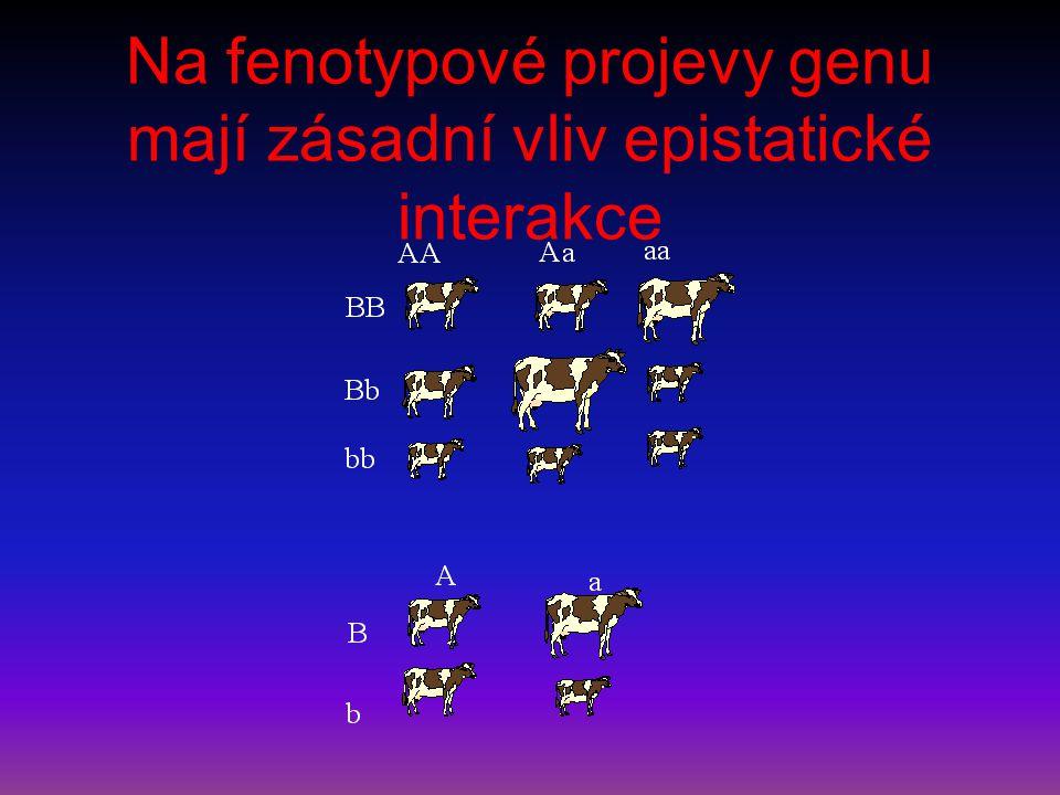 Na fenotypové projevy genu mají zásadní vliv epistatické interakce