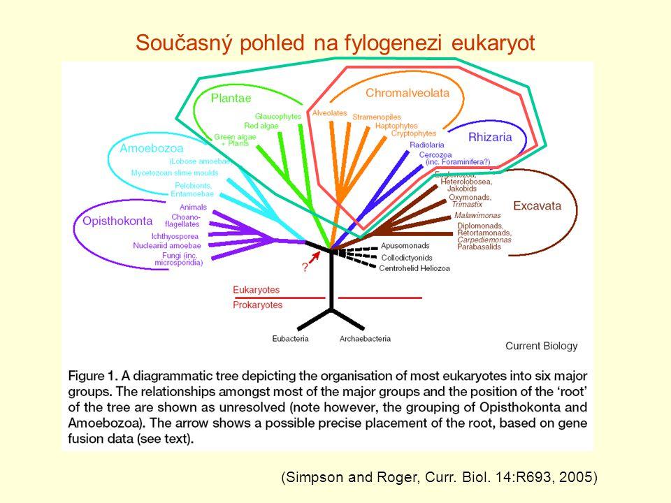 Současný pohled na fylogenezi eukaryot