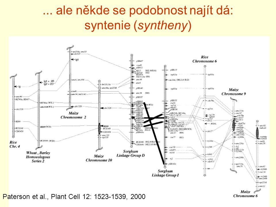 ... ale někde se podobnost najít dá: syntenie (syntheny)