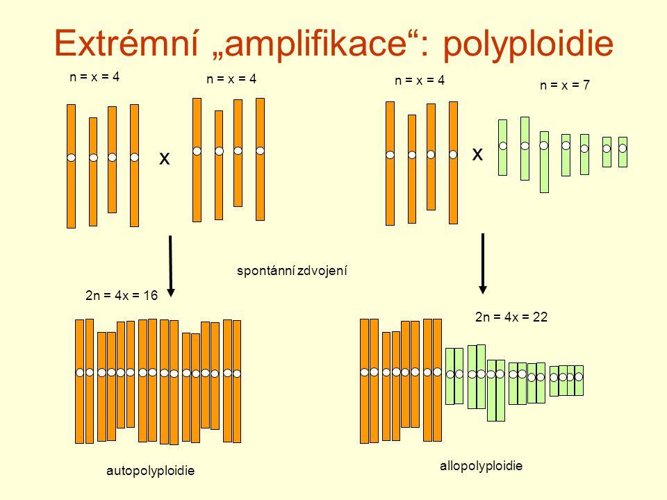 """Extrémní """"amplifikace : polyploidie"""