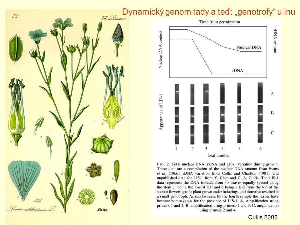 """Dynamický genom tady a teď: """"genotrofy u lnu"""