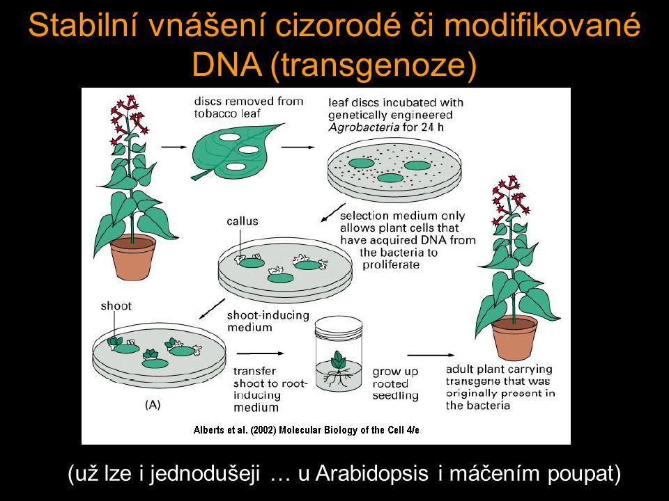 Stabilní vnášení cizorodé či modifikované DNA (transgenoze)