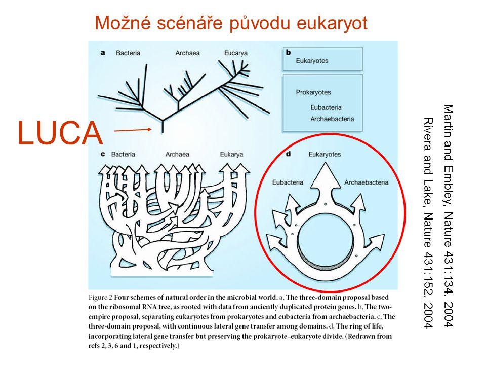 Možné scénáře původu eukaryot