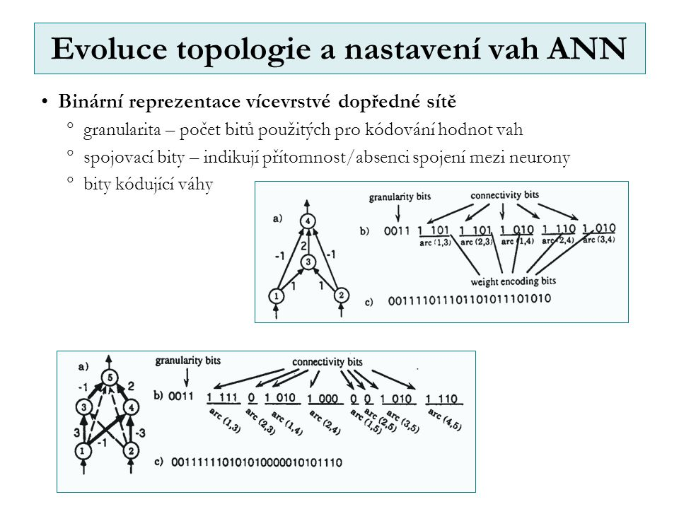 Evoluce topologie a nastavení vah ANN