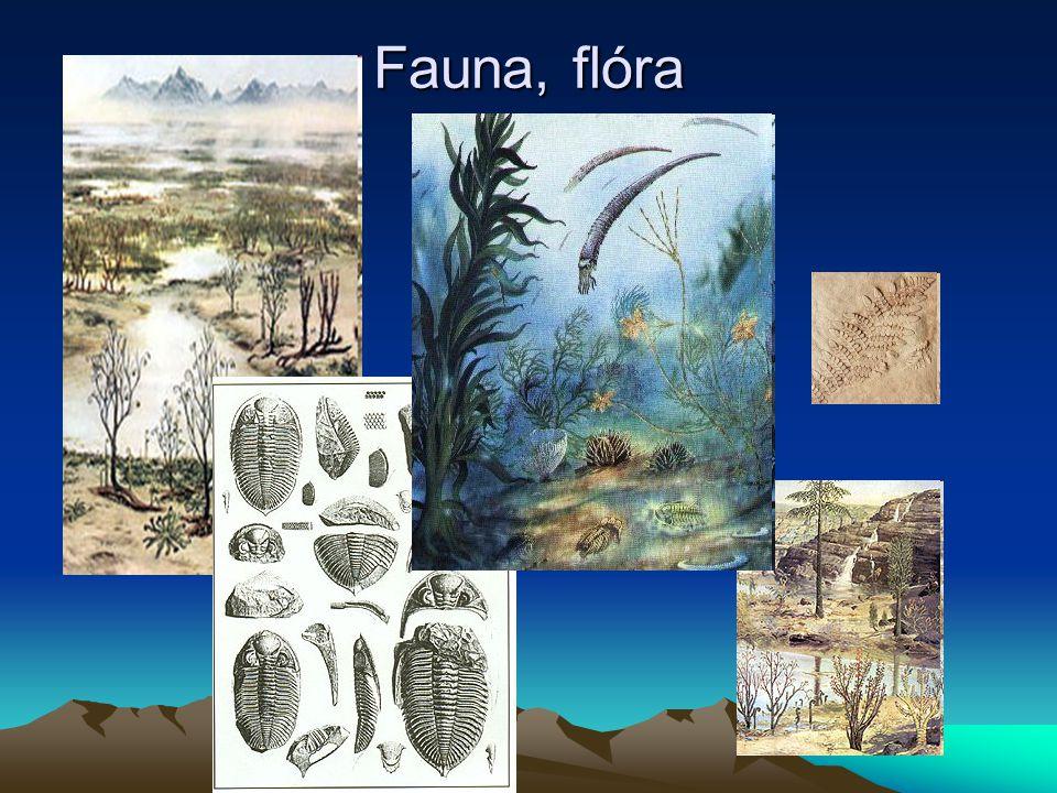 Fauna, flóra