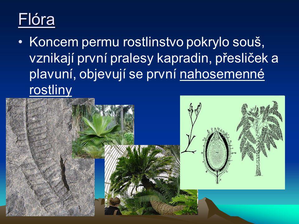Flóra Koncem permu rostlinstvo pokrylo souš, vznikají první pralesy kapradin, přesliček a plavuní, objevují se první nahosemenné rostliny.