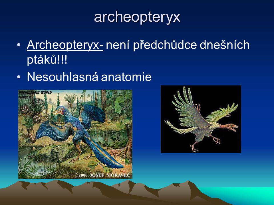 archeopteryx Archeopteryx- není předchůdce dnešních ptáků!!!