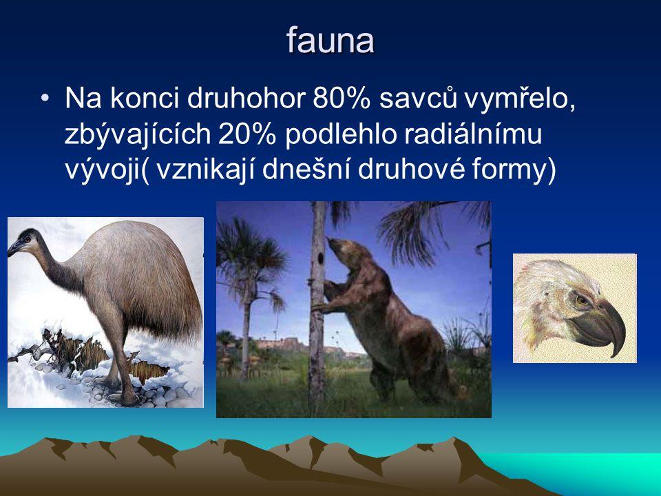 fauna Na konci druhohor 80% savců vymřelo, zbývajících 20% podlehlo radiálnímu vývoji( vznikají dnešní druhové formy)