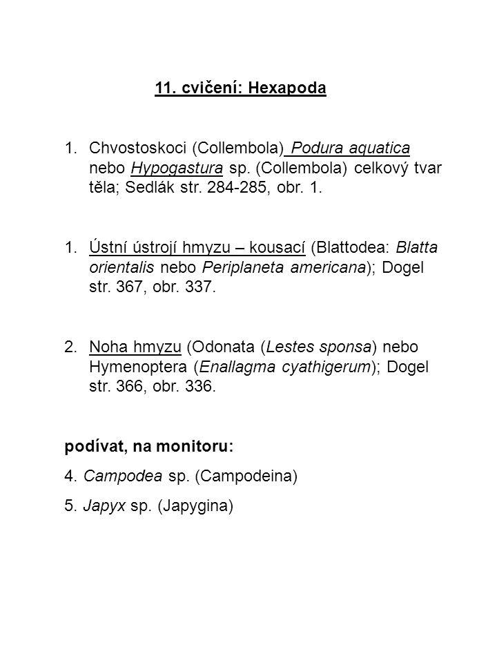 11. cvičení: Hexapoda Chvostoskoci (Collembola) Podura aquatica nebo Hypogastura sp. (Collembola) celkový tvar těla; Sedlák str. 284-285, obr. 1.
