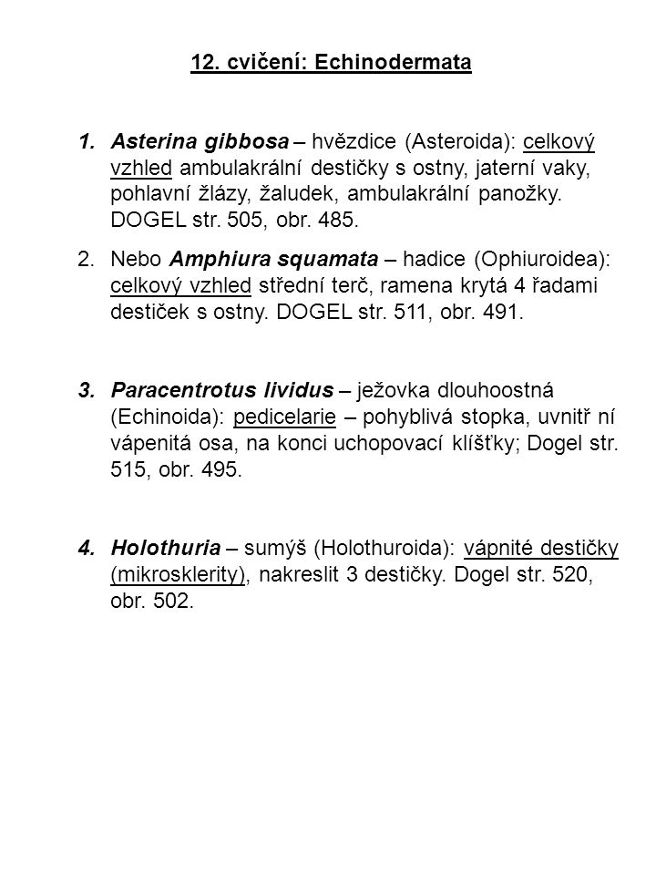 12. cvičení: Echinodermata