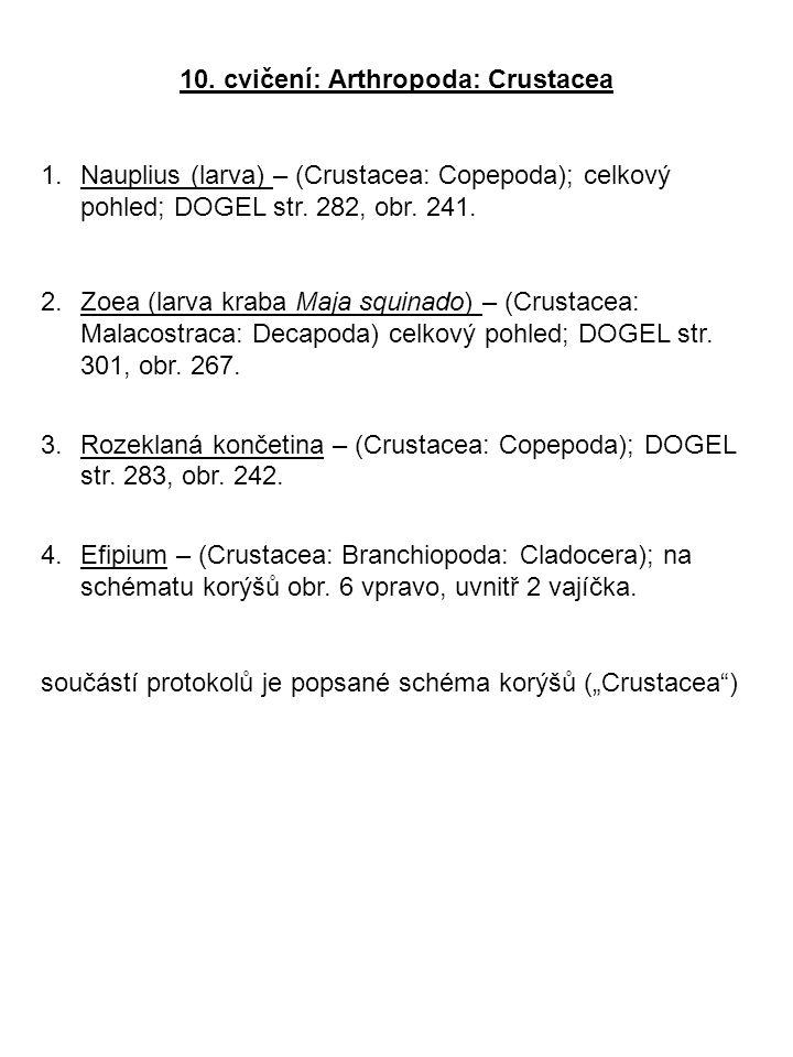 10. cvičení: Arthropoda: Crustacea