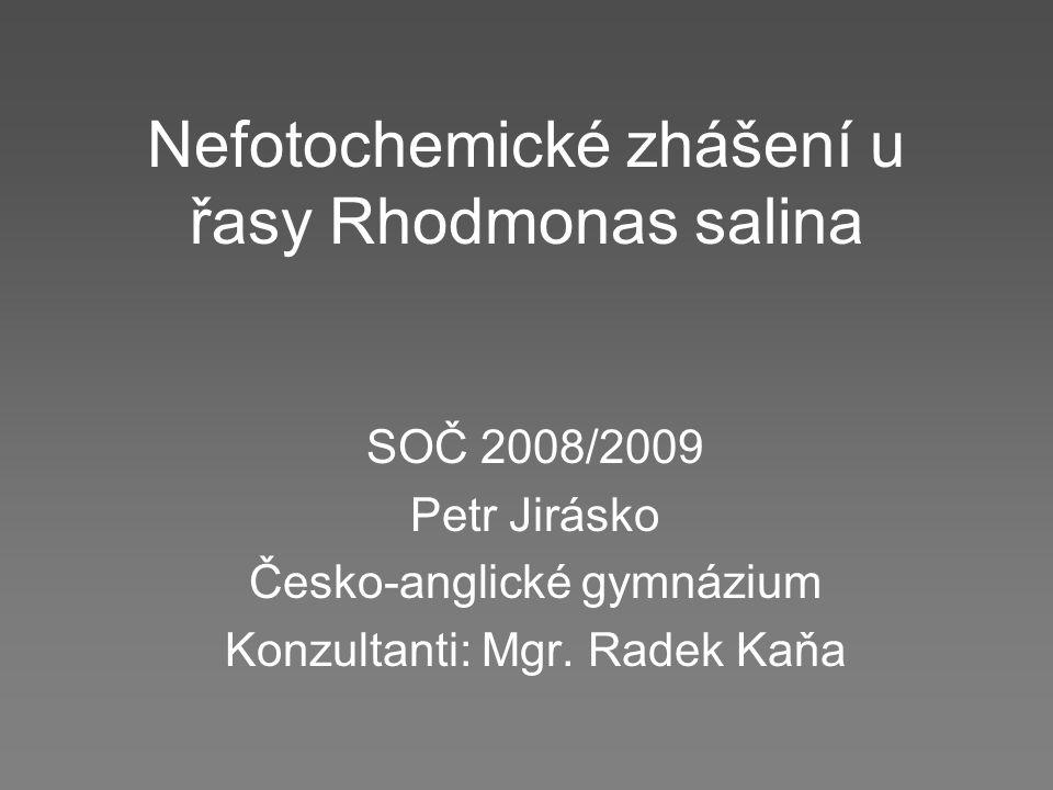 Nefotochemické zhášení u řasy Rhodmonas salina