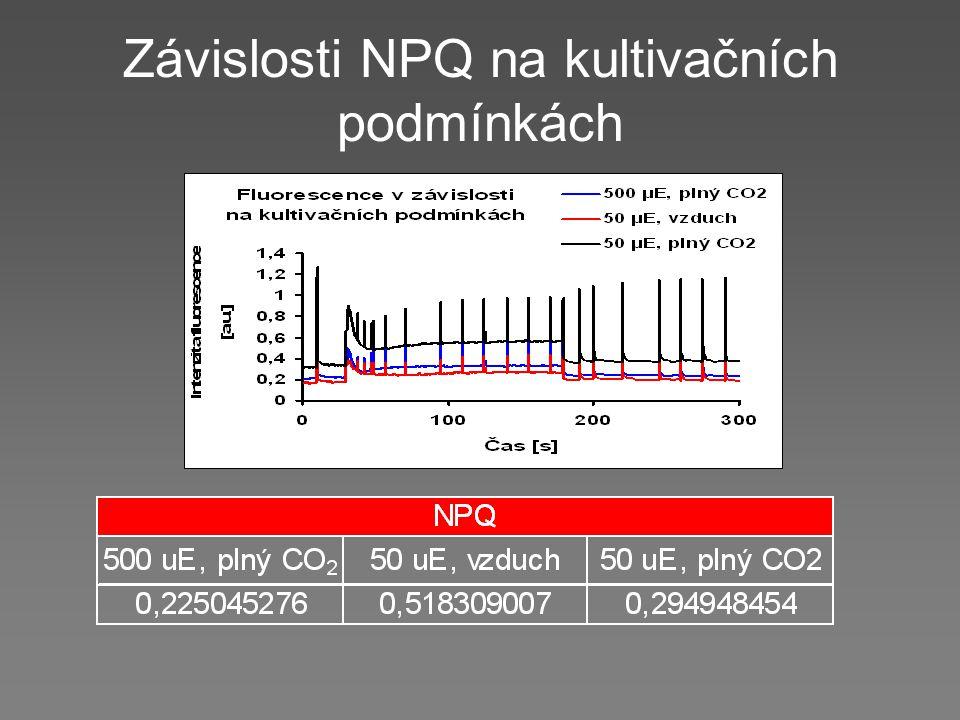 Závislosti NPQ na kultivačních podmínkách