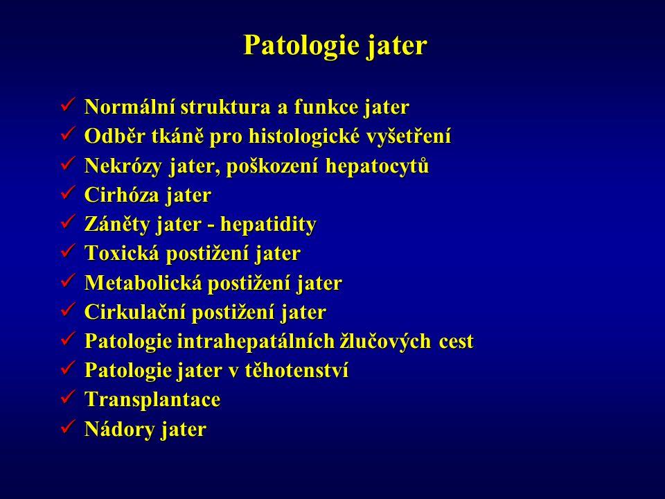 Patologie jater Normální struktura a funkce jater