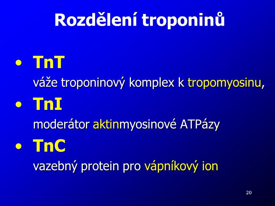 Rozdělení troponinů TnT TnI TnC
