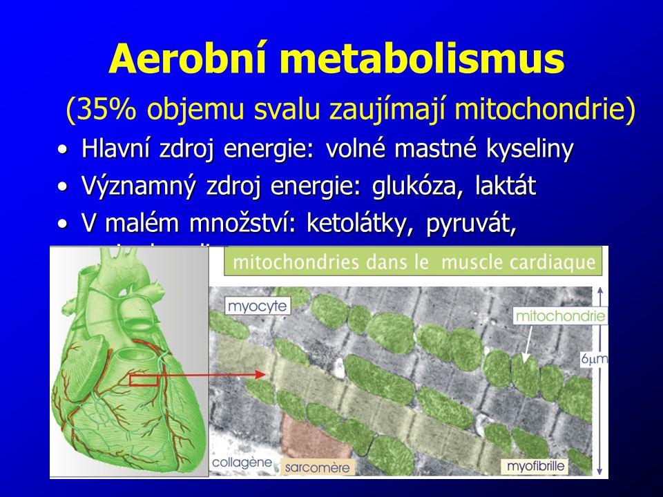 Aerobní metabolismus (35% objemu svalu zaujímají mitochondrie)