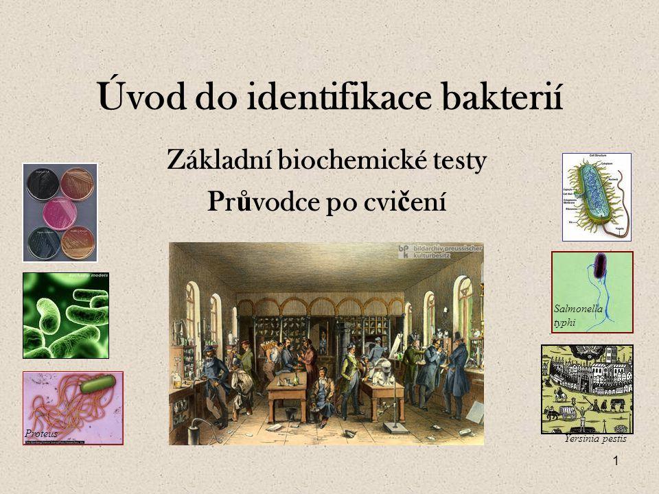 Úvod do identifikace bakterií