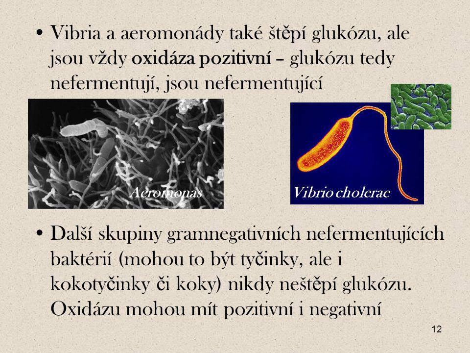 Vibria a aeromonády také štěpí glukózu, ale jsou vždy oxidáza pozitivní – glukózu tedy nefermentují, jsou nefermentující