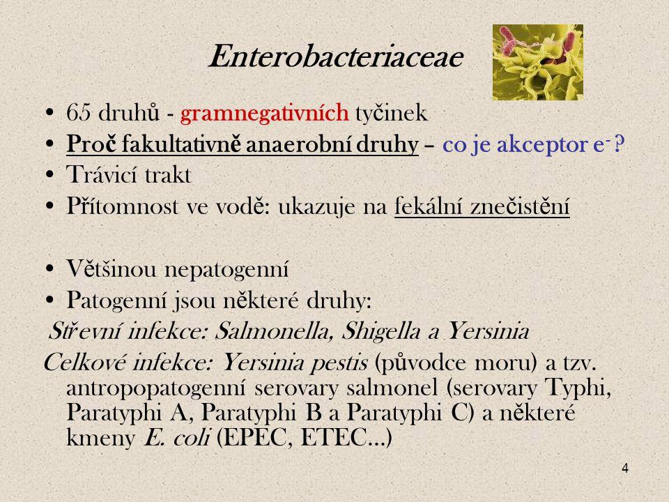 Enterobacteriaceae 65 druhů - gramnegativních tyčinek