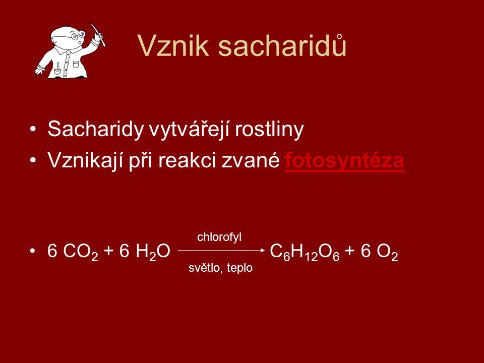 Vznik sacharidů Sacharidy vytvářejí rostliny