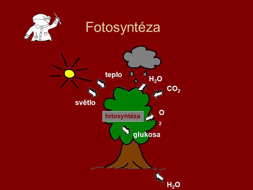 Fotosyntéza teplo H2O CO2 světlo O2 fotosyntéza glukosa H2O