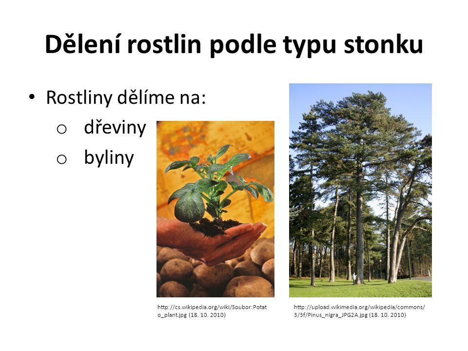 Dělení rostlin podle typu stonku