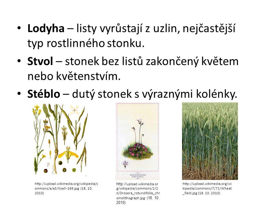 Lodyha – listy vyrůstají z uzlin, nejčastější typ rostlinného stonku.