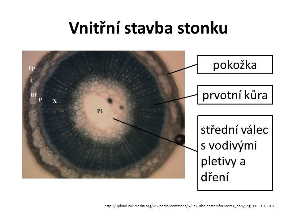 Vnitřní stavba stonku pokožka prvotní kůra