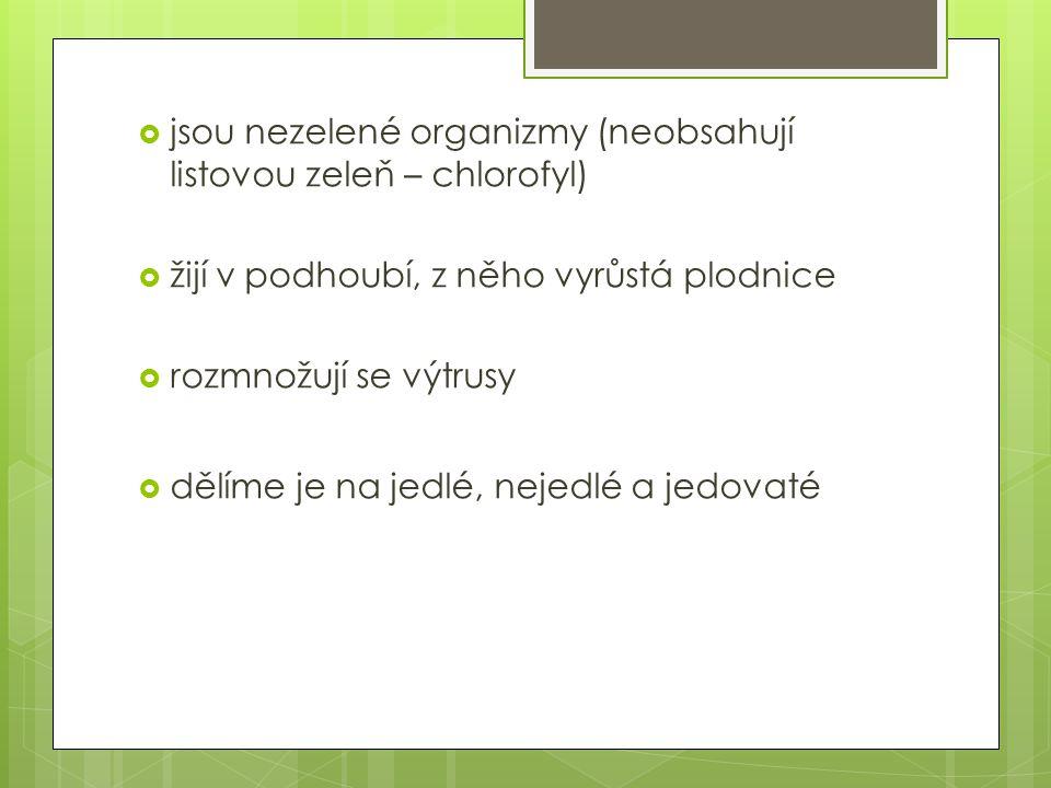 jsou nezelené organizmy (neobsahují listovou zeleň – chlorofyl)