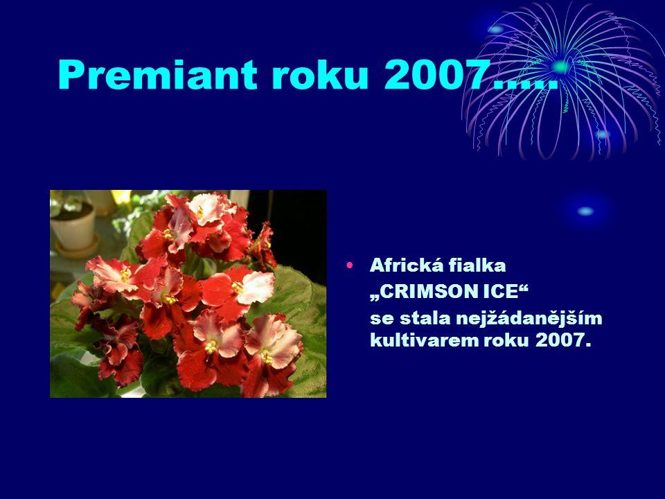"Premiant roku 2007….. Africká fialka ""CRIMSON ICE"