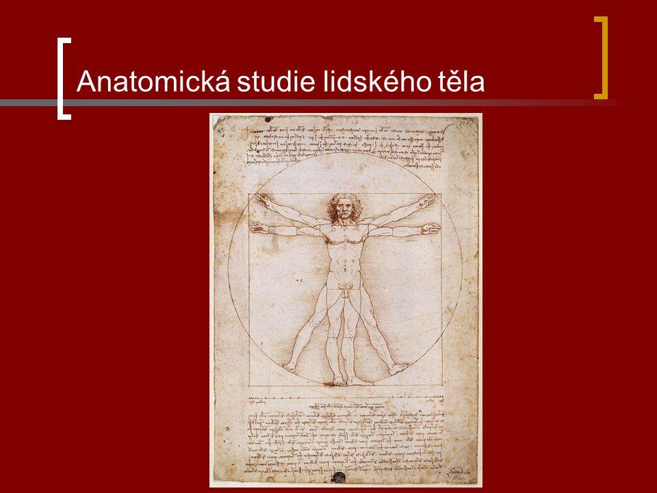 Anatomická studie lidského těla
