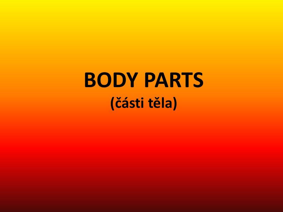 BODY PARTS (části těla)