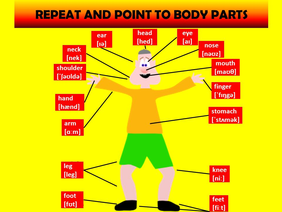 REPEAT AND POINT TO BODY PARTS