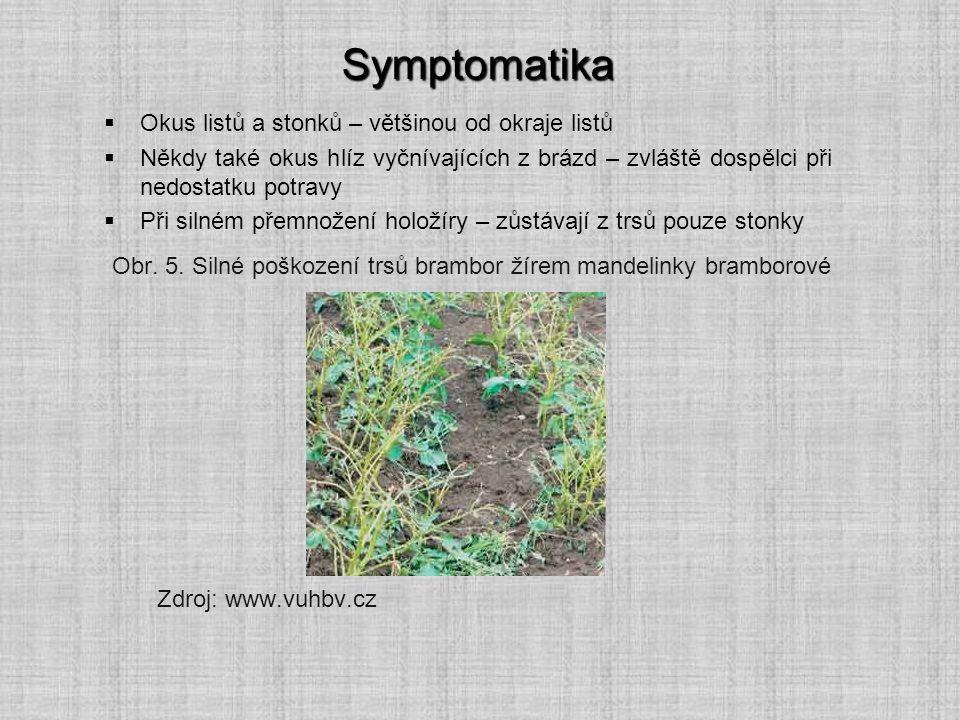 Symptomatika Okus listů a stonků – většinou od okraje listů