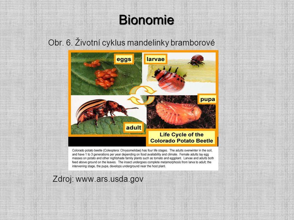 Bionomie Obr. 6. Životní cyklus mandelinky bramborové
