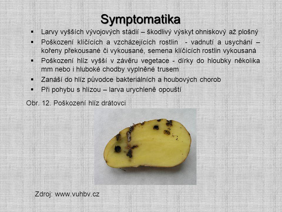 Symptomatika Larvy vyšších vývojových stádií – škodlivý výskyt ohniskový až plošný.