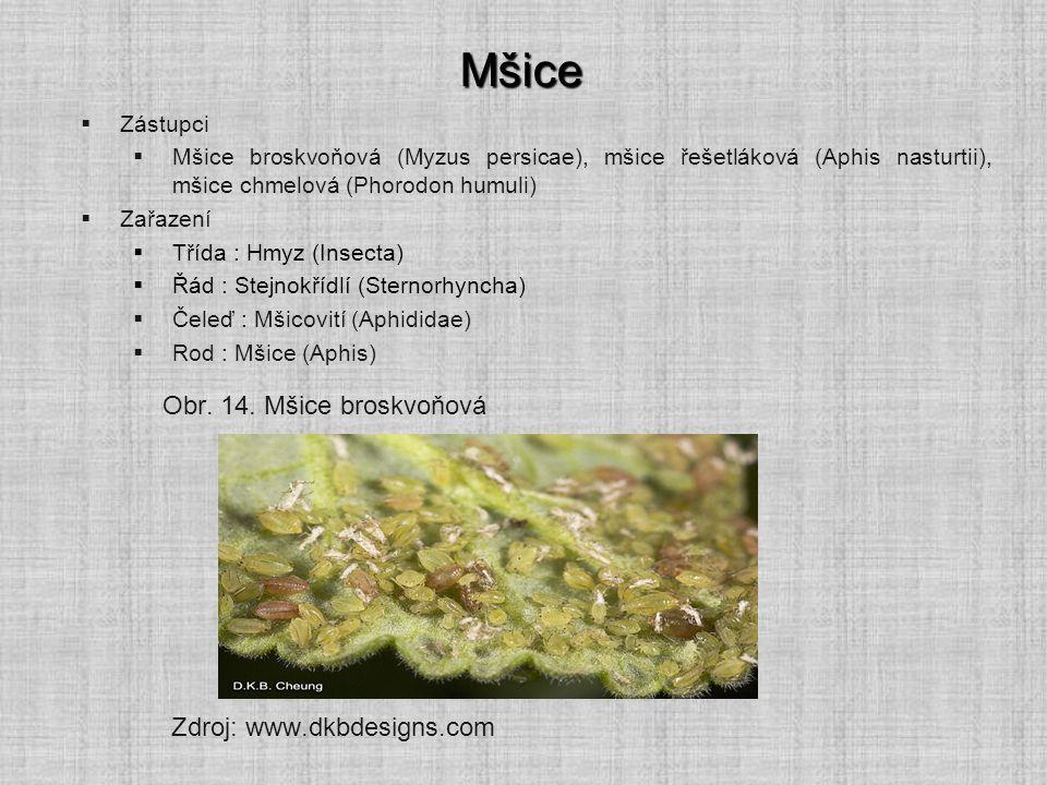 Mšice Obr. 14. Mšice broskvoňová Zdroj: www.dkbdesigns.com Zástupci