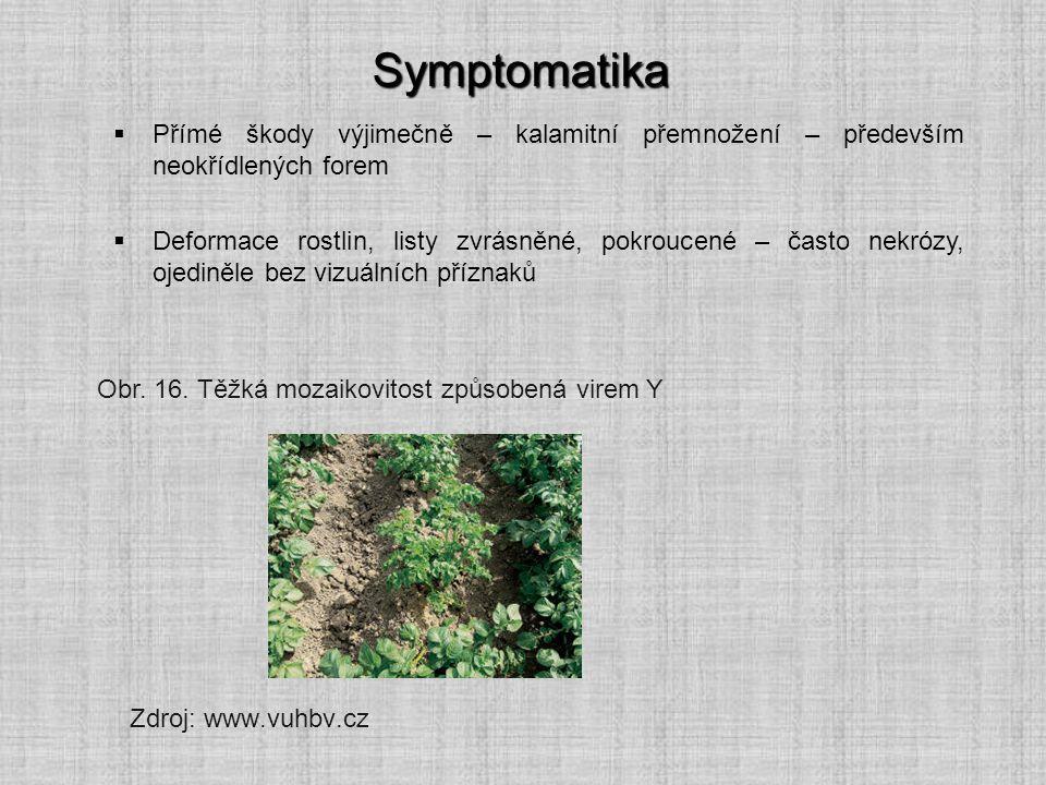 Symptomatika Přímé škody výjimečně – kalamitní přemnožení – především neokřídlených forem.