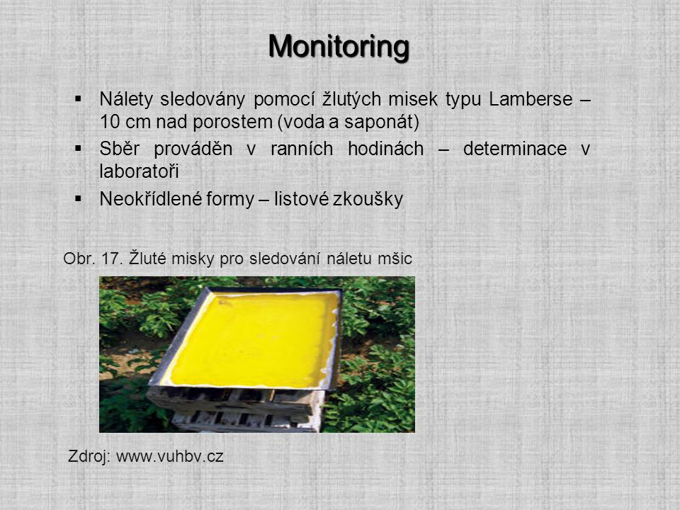 Monitoring Nálety sledovány pomocí žlutých misek typu Lamberse – 10 cm nad porostem (voda a saponát)