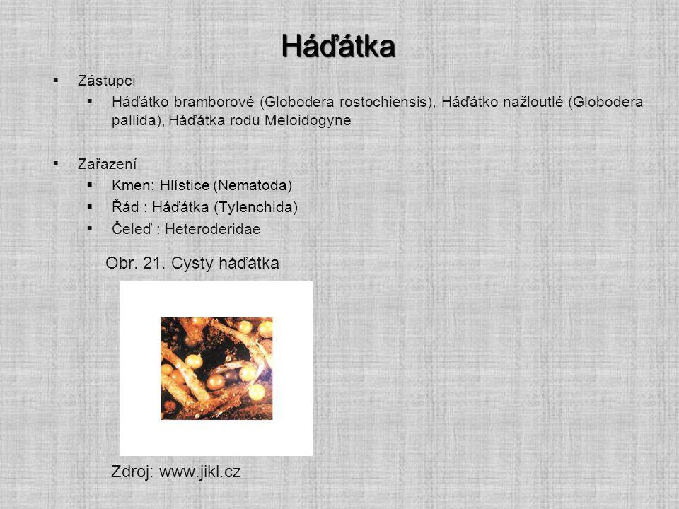 Háďátka Obr. 21. Cysty háďátka Zdroj: www.jikl.cz Zástupci