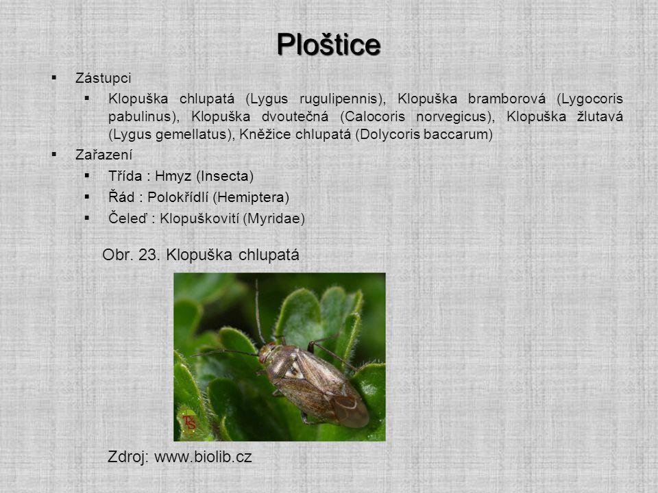 Ploštice Obr. 23. Klopuška chlupatá Zdroj: www.biolib.cz Zástupci