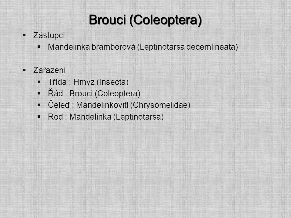 Brouci (Coleoptera) Zástupci
