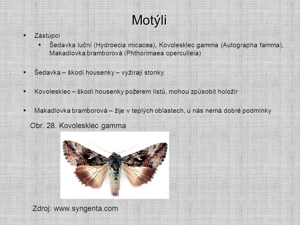 Motýli Obr. 28. Kovolesklec gamma Zdroj: www.syngenta.com Zástupci