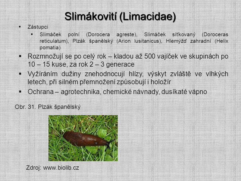 Slimákovití (Limacidae)