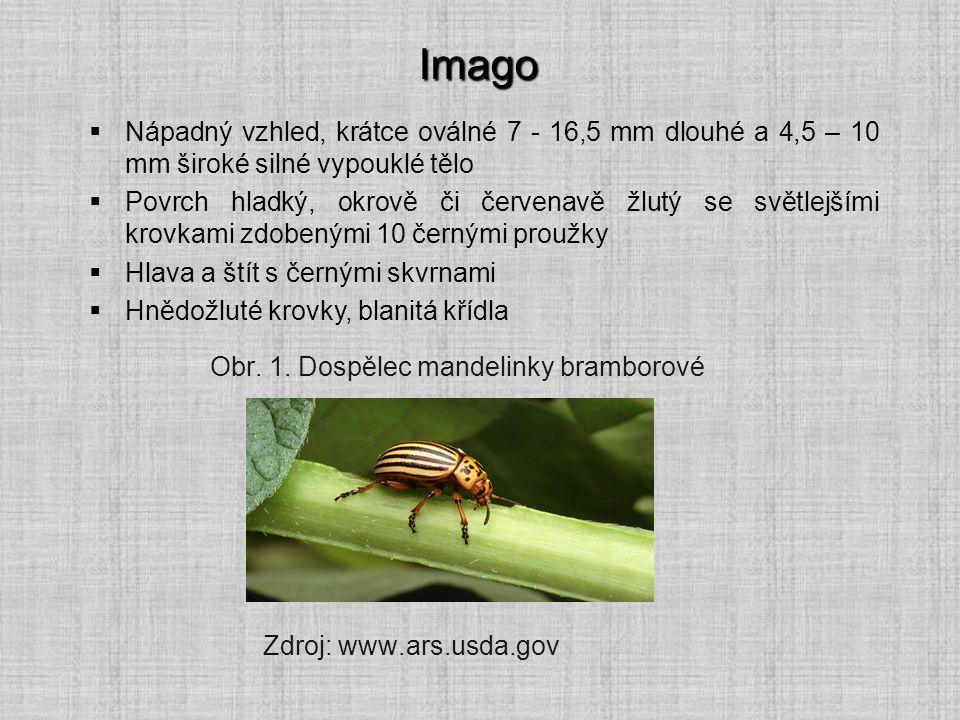 Imago Nápadný vzhled, krátce oválné 7 - 16,5 mm dlouhé a 4,5 – 10 mm široké silné vypouklé tělo.