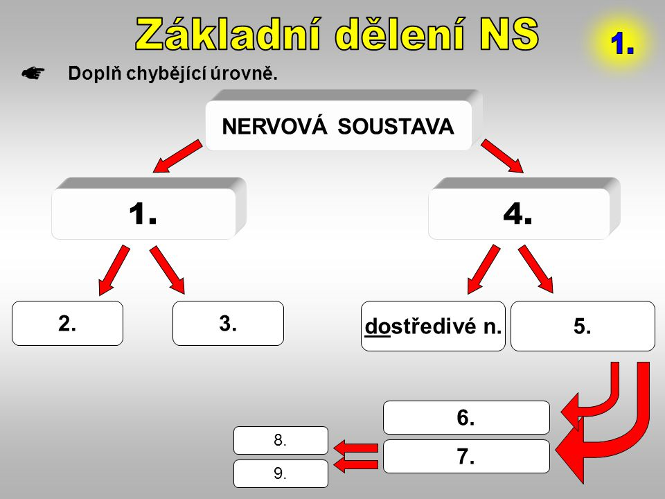 Základní dělení NS 1. 1. 4. NERVOVÁ SOUSTAVA 2. 3. dostředivé n. 5. 6.