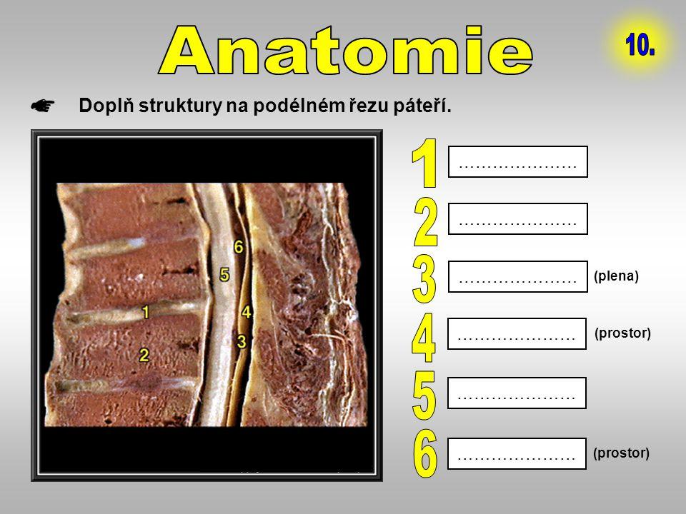 Anatomie 10. 1 2 3 4 5 6 Doplň struktury na podélném řezu páteří.