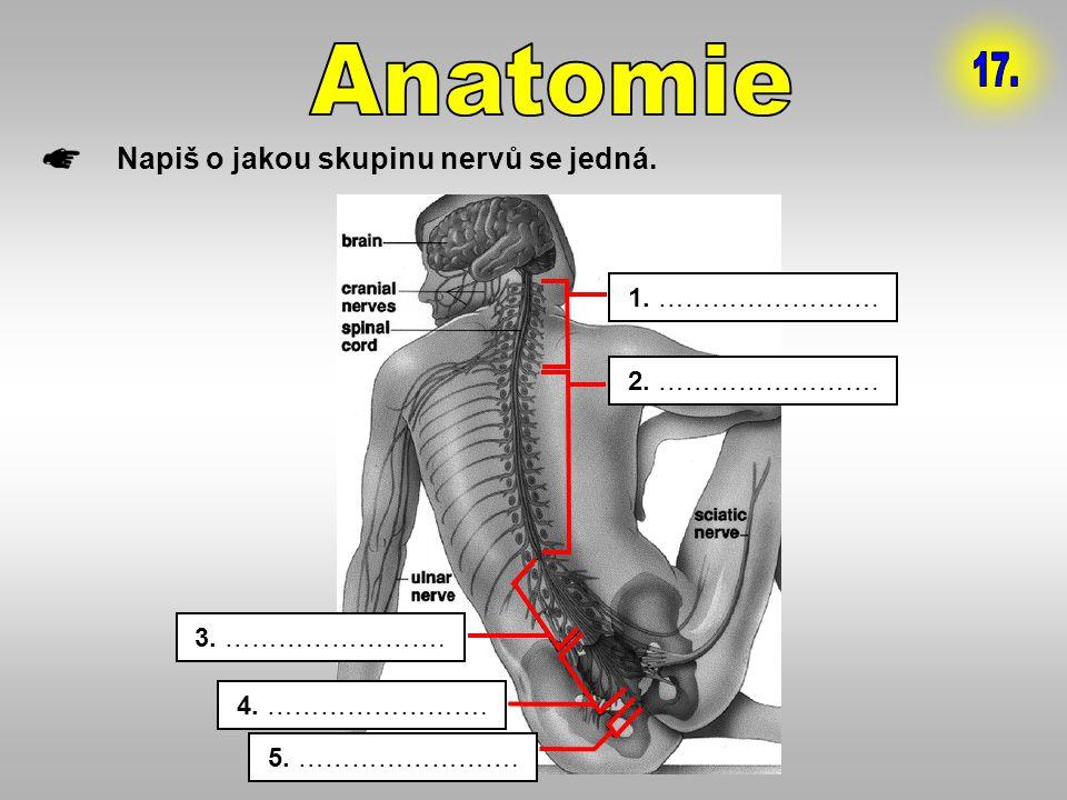 Anatomie 17. Napiš o jakou skupinu nervů se jedná. 1. …………………….