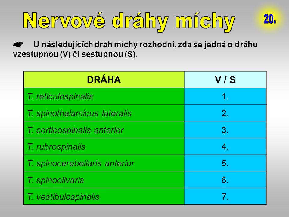 Nervové dráhy míchy 20. DRÁHA V / S T. reticulospinalis 1.