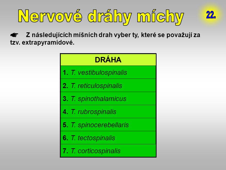 Nervové dráhy míchy 22. DRÁHA 1. T. vestibulospinalis